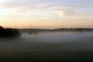 Qniowe pastwiska o poranku jesień 2005