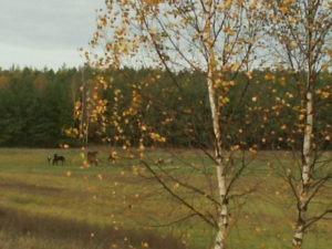 Qń jesienią 2006