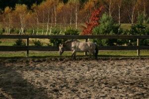 Pierwszy koń w Qniu - Kuba