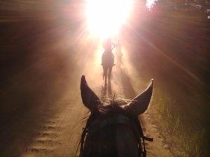 droga do Krówki Leśnej - rajdy Qń 2015