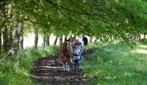 nauka jazdy konnej dla dzieci w ośrodku Qń