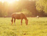 letnie obozy jeździeckie